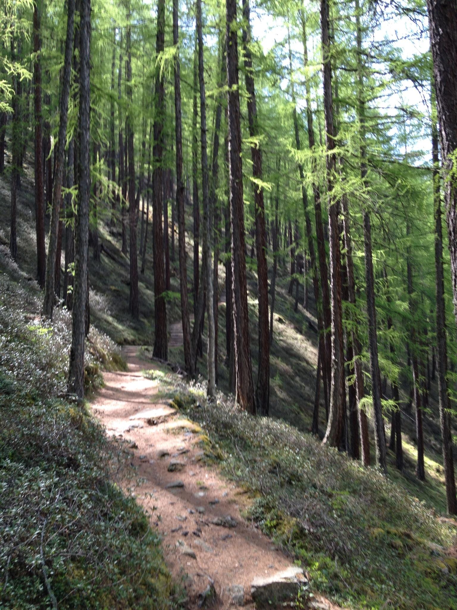 Der wenig steile Wanderweg
