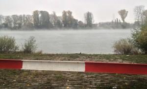 Nebel über dem Wasser des Rheins