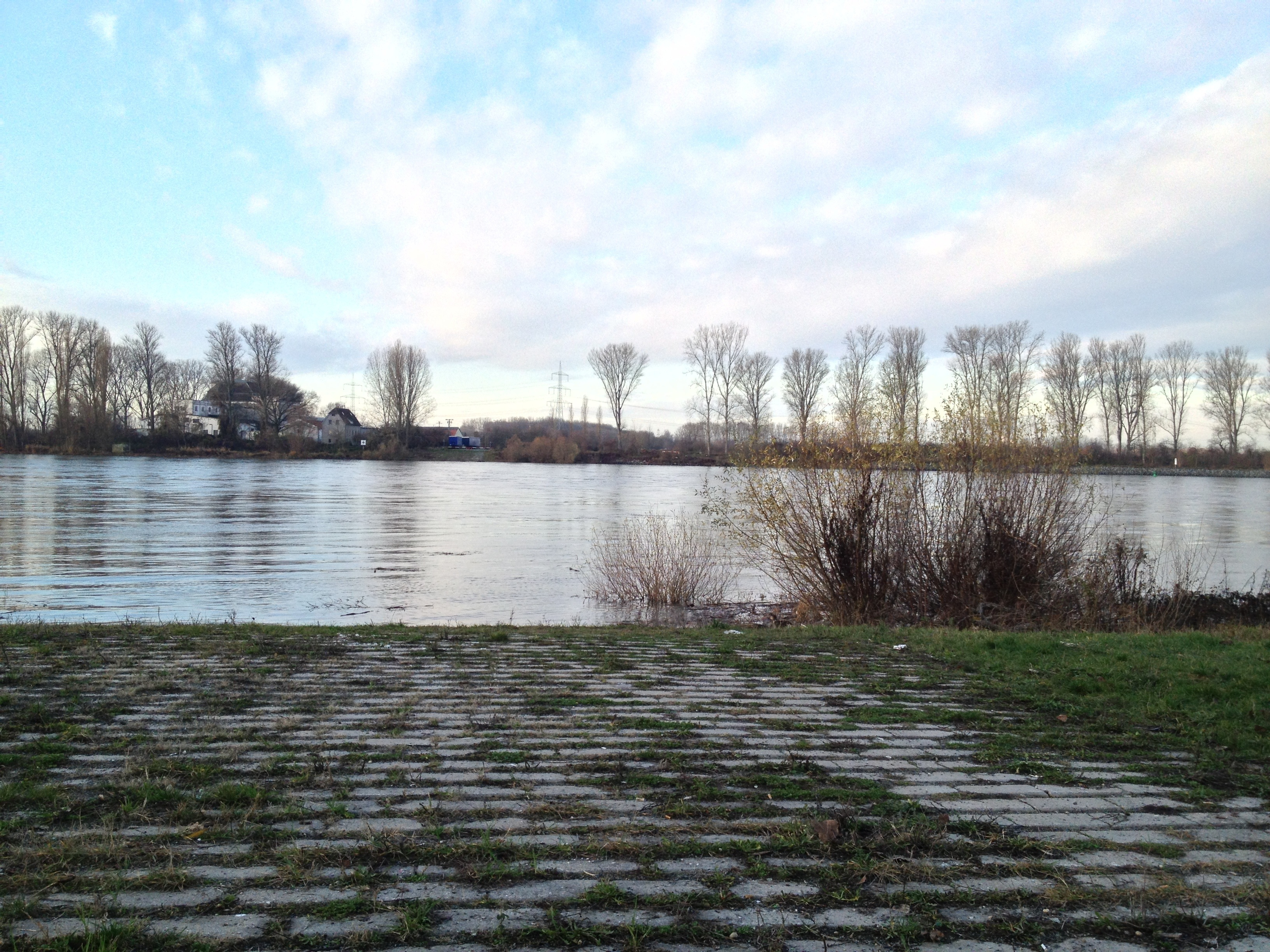 Rhein von der Natostraße in Lampertheim aus fotografiert