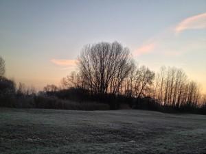 Morgens nach dem Frost auf der Natostrasse in Lampertheim