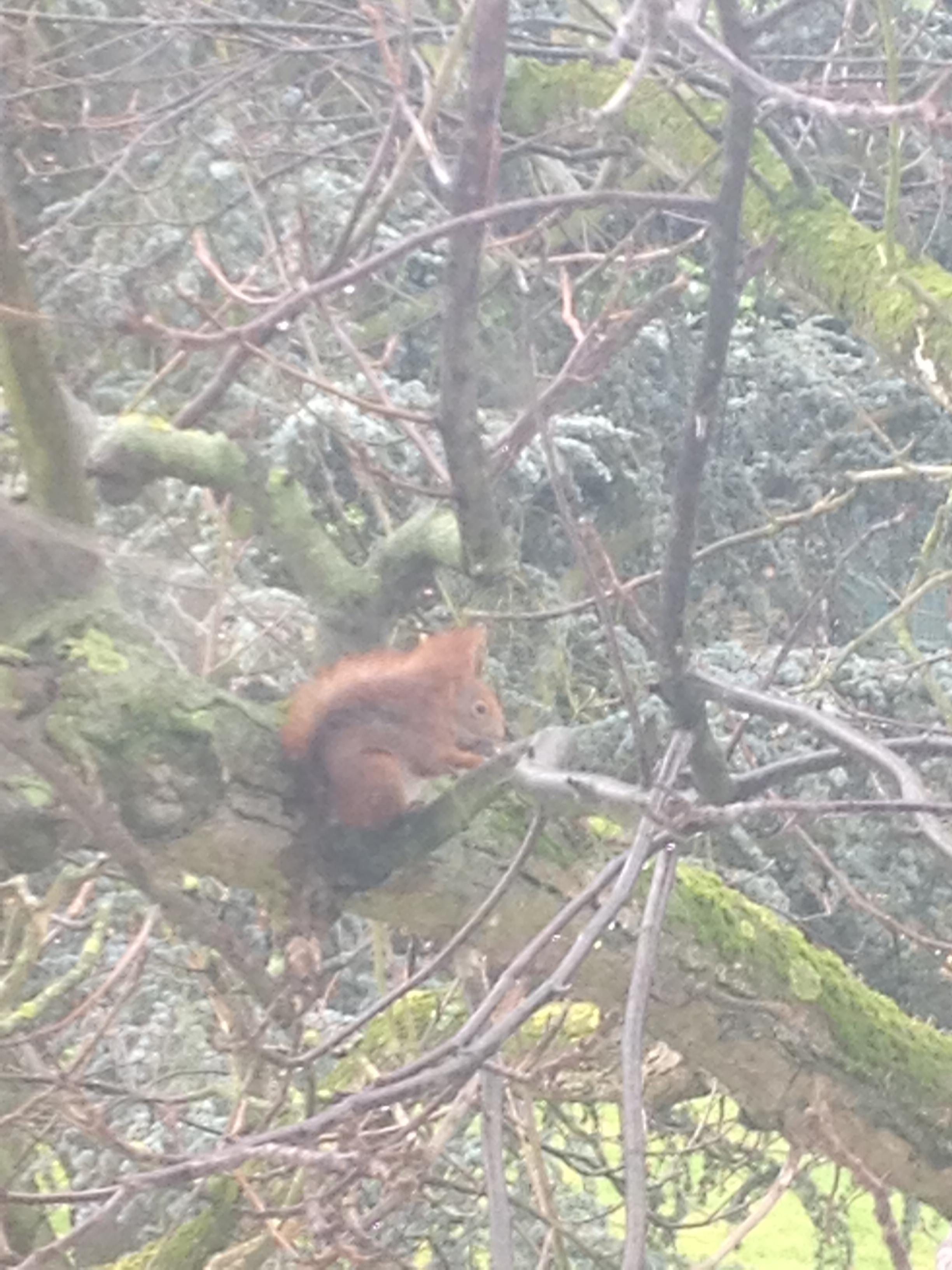 Eichhörnchen vor meinem Fenster