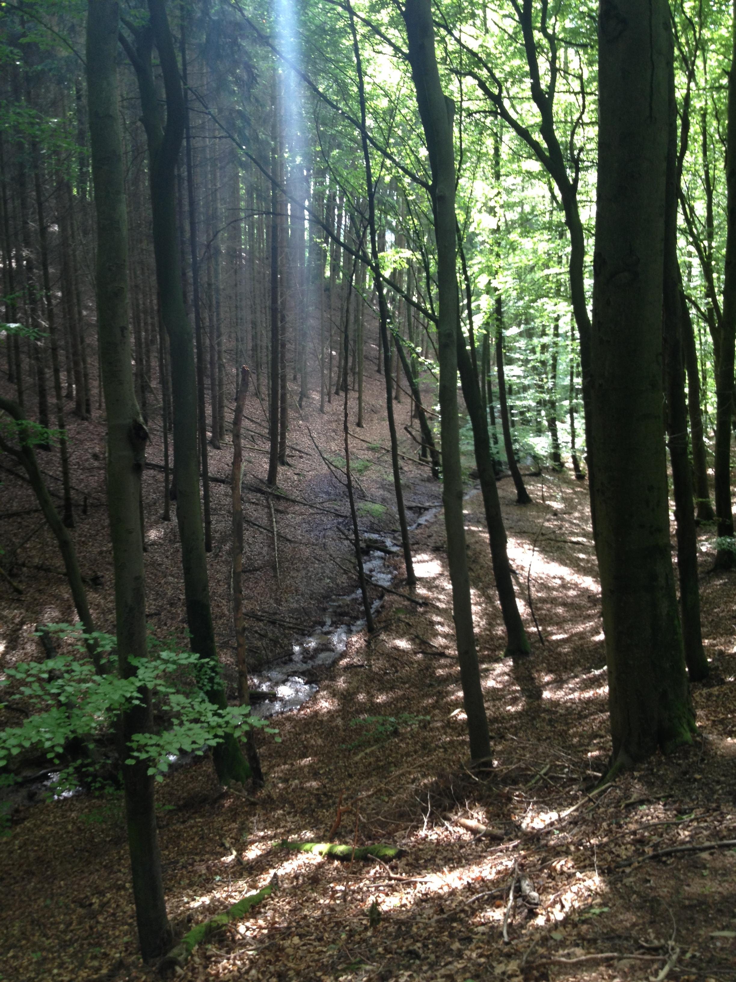 Wald in Birkenau