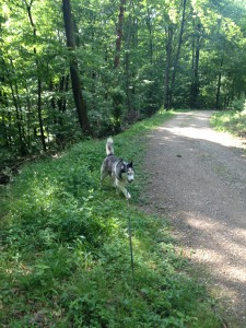 Luke beim Waldspaziergang in Birkenau