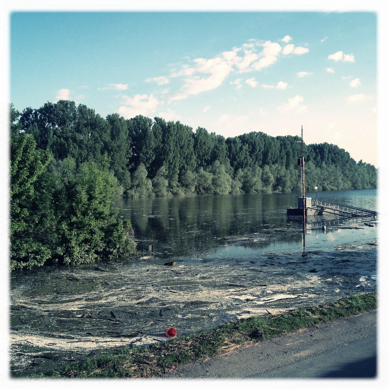 Hochwasser auf dem Biedensand in Lampertheim. Aufgenommen mit der Hipstamatic am 07.06.2013
