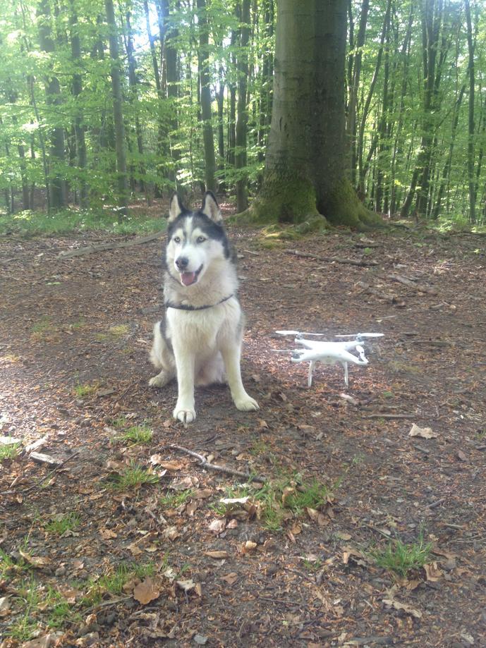 Husky Luke und mein neuer Quadcopter